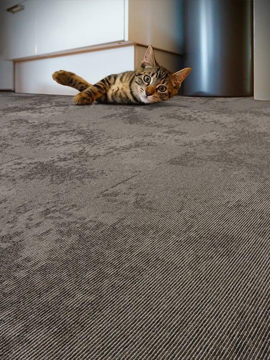 image 17 of 17 – Interfloor Graphic Project-SDN – Concrete dessin C32 – Woon keuken met huisdier