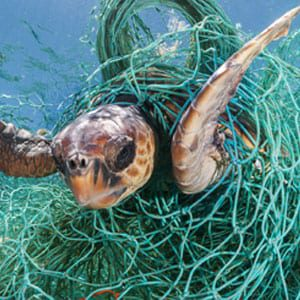 Econyl_Fishing-nets-turtle